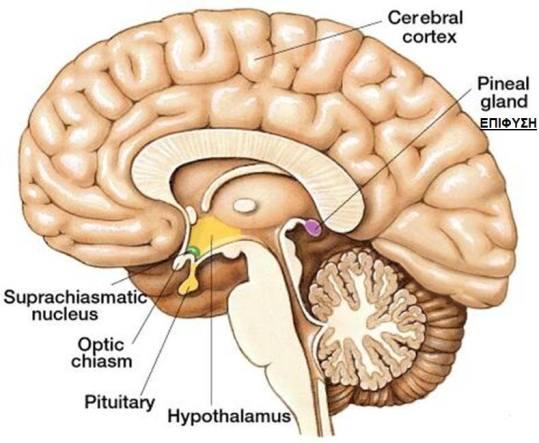 dxn brain morinzhi νονι